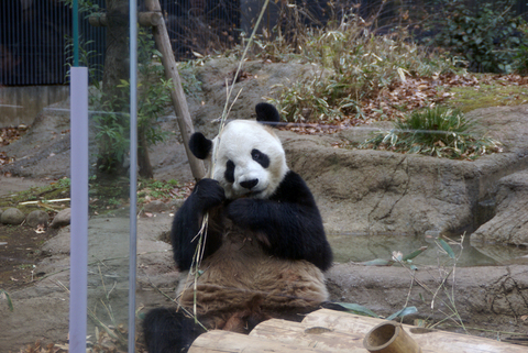 上野動物園その1